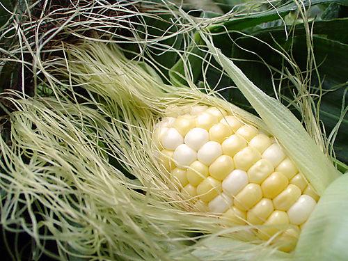 Fresh-Corn