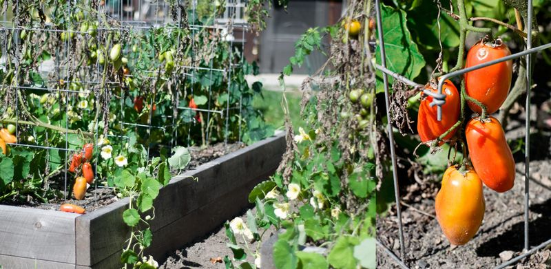 Crap-Tomatoes