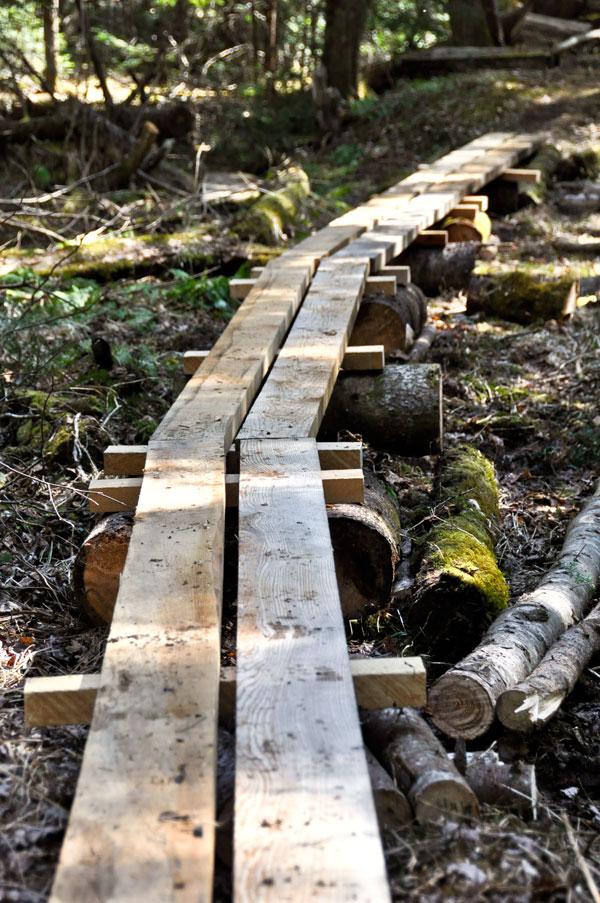 Forest-Boardwalk