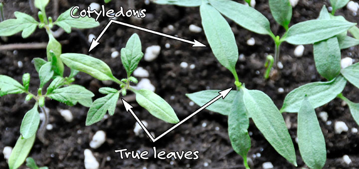 Leaf-types