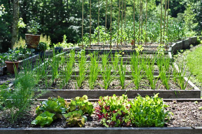 Garden-June-12