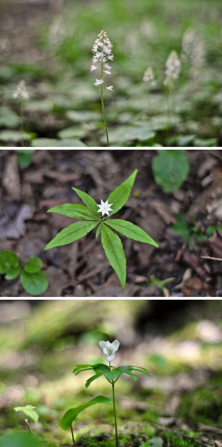 Little-White-Flowers