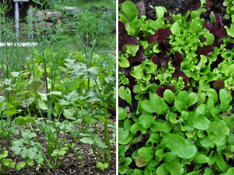 Herbs-&-Greens