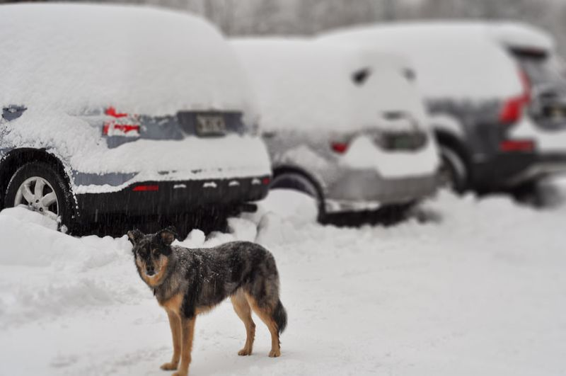 Snow-Covered-Cars