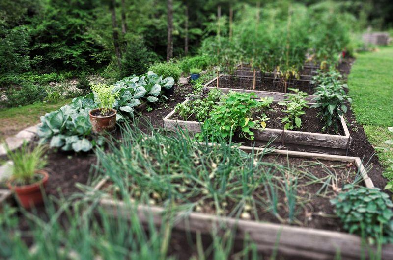 Garden-07_29