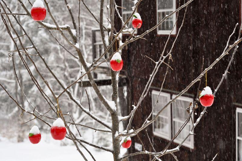Apple-Tree-in-Snow