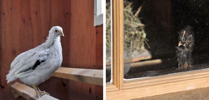 Window-Birds