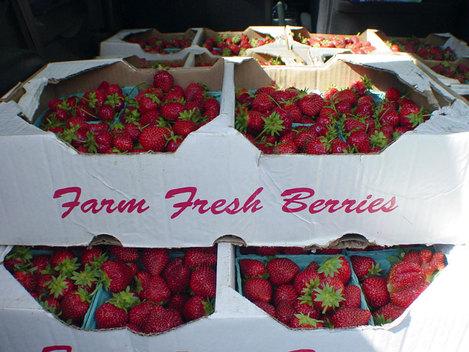 Carfulofberries